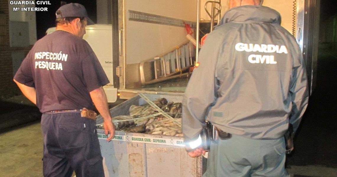 La Guardia Civil junto con Inspección Pesquera de la Junta de Andalucía intervienen 3.603 kilos de pulpo