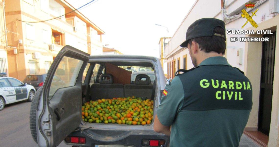 La Guardia Civil detiene a tres personas y recupera 500 kilos de naranjas sustraídas en la localidad de Villablanca