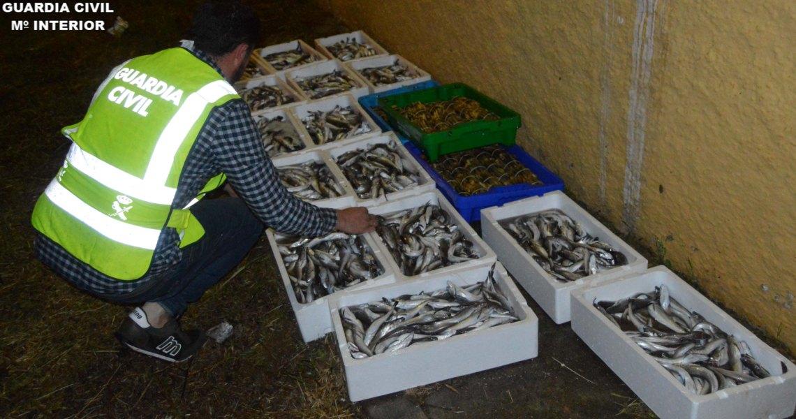 La Guardia Civil incauta 110 kilos de especies pesqueras no aptas para su comercio en la localidad de Ayamonte