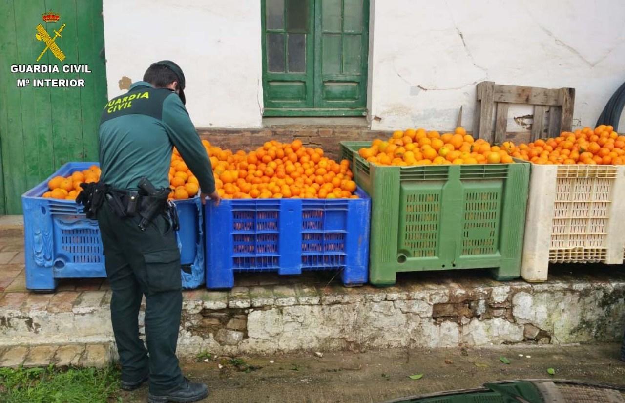 La Guardia Civil interviene 2.700 kilos de naranjas que habían sido sustraídas en una finca del término municipal de Gibraleón