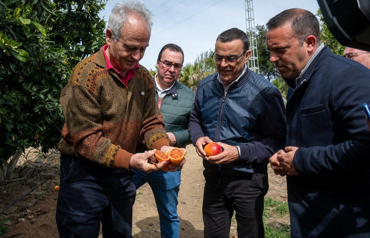 Caraballo visita una producción citrícola en San Silvestre de Guzmán para conocer sobre el terreno el avance de la campaña