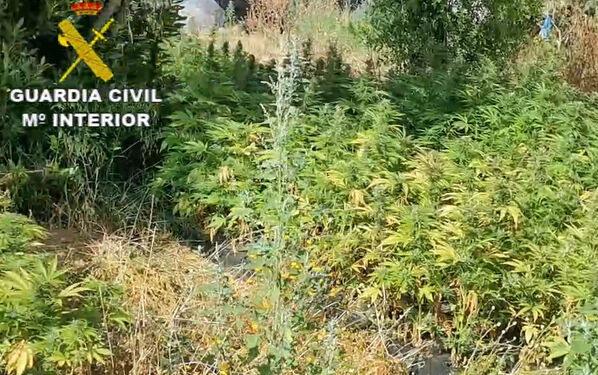 La Guardia Civil desmantela dos plantaciones de marihuana en Cartaya y Villablanca