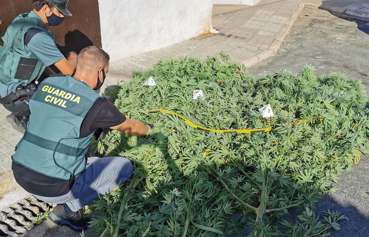La Guardia Civil localiza una plantación de marihuana en una vivienda en Gibraleón