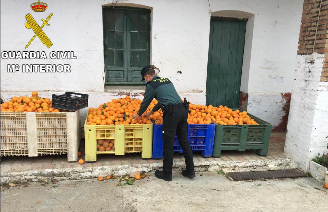 La Guardia Civil recupera 1.100 kg. de naranjas que habían sido sustraídas en una finca de Gibraleón