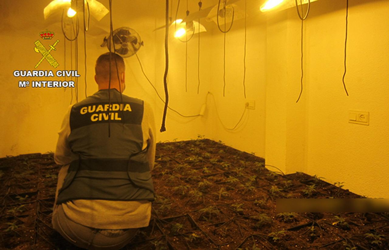 La Guardia Civil desmantela una importante plantación de marihuana en Gibraleón