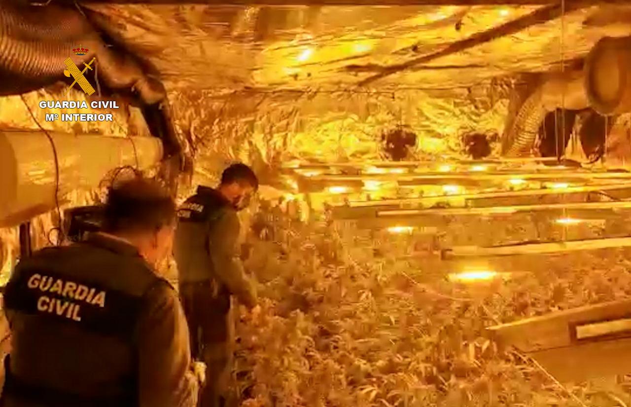 La Guardia Civil desmantela una plantación de marihuana en una nave en Gibraleón