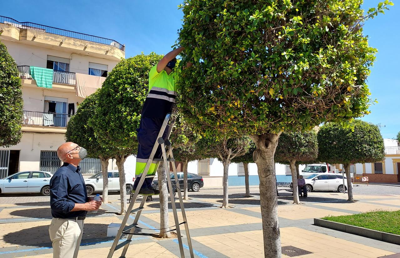 El Ayuntamiento de Lepe realiza una suelta de insectos auxiliares para el control natural de plagas en la vegetación
